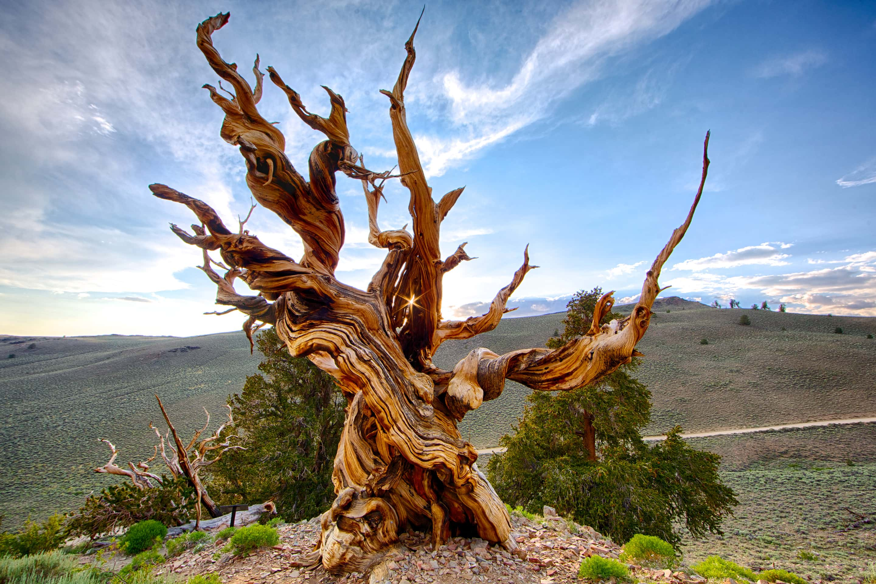 How do I find my story? Ask the Bristlecone Pine.